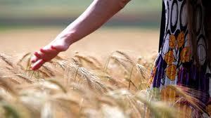 Като жито ни узрява любовта